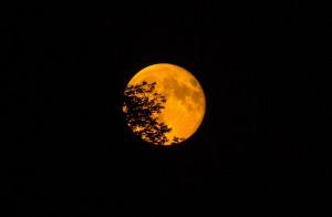super-moon-966848_1280